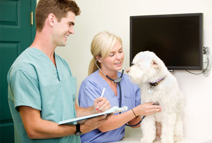 Veterinary Nurses Placement